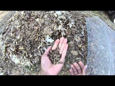 How to Make Leaf Mold (Homemade Peat Moss)