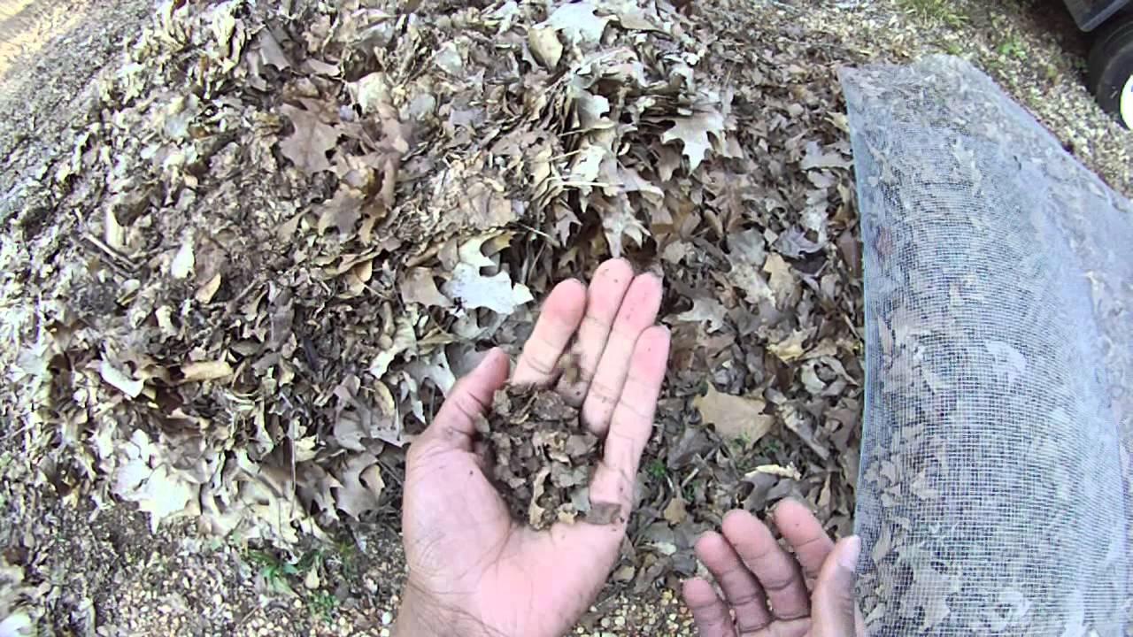 How To Make Leaf Mold Homemade Peat Moss Youtube
