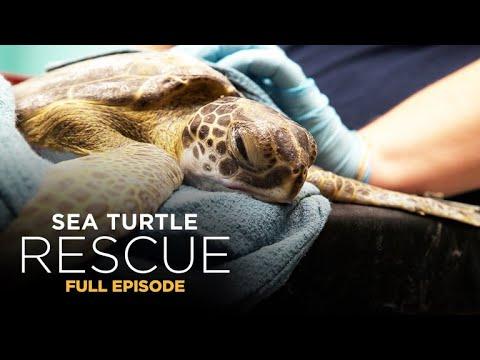 Sea Turtle Rescue 102: Maximum Capacity