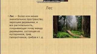 Доклад об экосистеме леса.