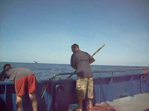 Bluefin Tuna @ Port Lincoln