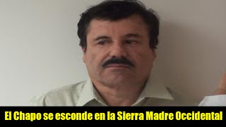 El Chapo se esconde en la Sierra Madre Occidental