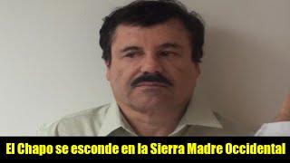 El Chapo se esconde en la Sierra Madre Occidental