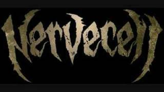 Nervecell - Ratios