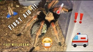 Tarantula Pairing GONE WRONG ~ PLEASE LEARN FROM MY MISTAKE !!! thumbnail