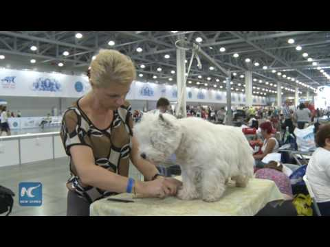 RAW: Dogs of 300 breeds rush to Moscow for International World Dog Show