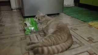 Кот рвет туалетную бумагу