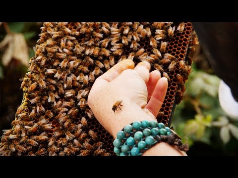 The Importance of Bees with Bee Girl