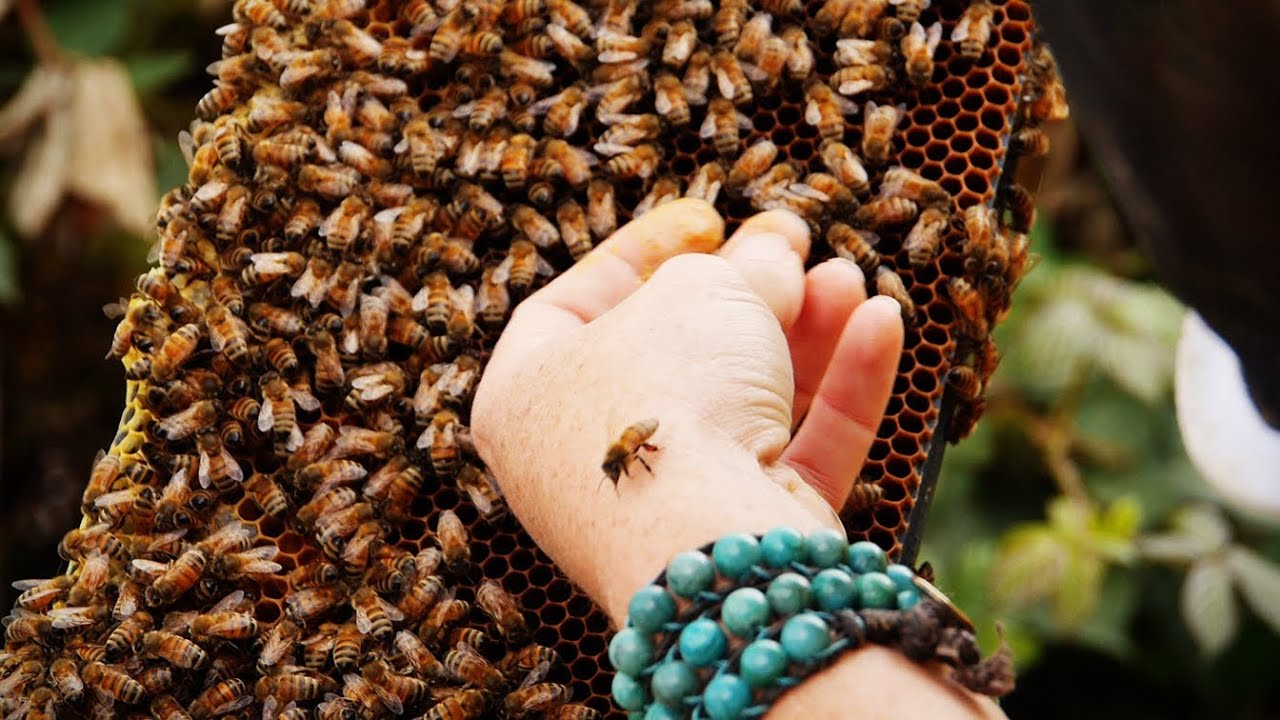 The importance of bees with bee girl youtube sciox Choice Image