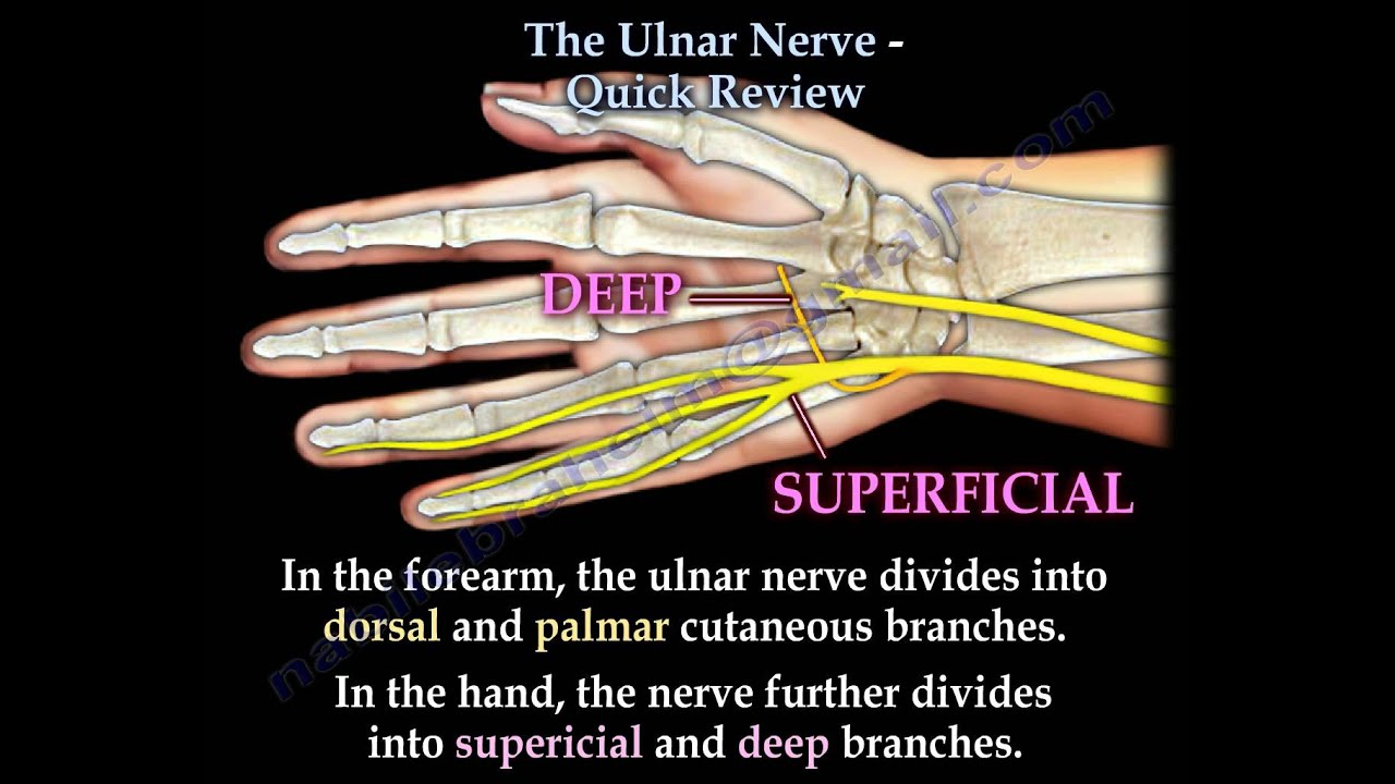 ulnar nerve - photo #31