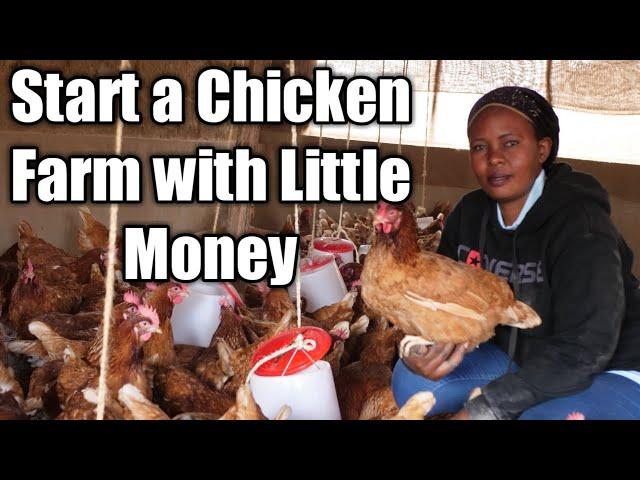 Start a Chicken Farm with Little Money