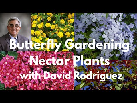 Butterfly Gardening Nectar Plants with David Rodriguez
