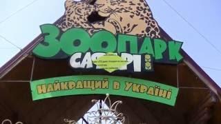 Павиан Гамадрил в Зоопарке-Сафари.Бердянск 2016 год.