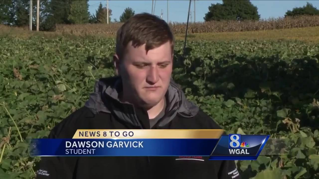 Farmer, student grows pink pumpkins for Breast Cancer Awareness Month