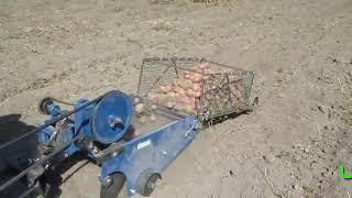 Копаю картоплю транспортерною копалкою без бункера і з бункером
