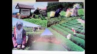 ดอยแม่สลอง ไร่ชา101 Doi mae salong 101 tea plantation