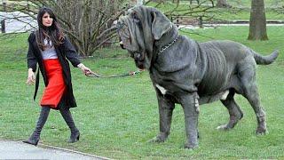 Te psy są tylko i wyłącznie dla najbogatszych ludzi!