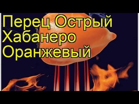 Перец острый Хабанеро Оранжевый. Краткий обзор, описание capsicum annuum Habanero Oranzhevyj