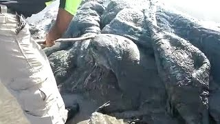 Mystery sea creature washes up on Mexico beach