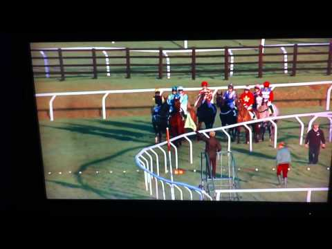 Mad Moose Refuses to Race at Cheltenham, 13th December 2014