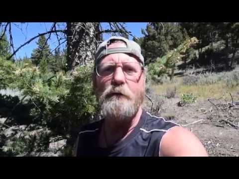 Bear Encounter Yellowstone Trail