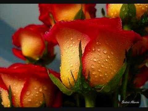 Jardín de rosas - Bertina - YouTube