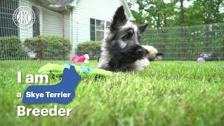 I am a Skye Terrier Breeder  Maida Connor and Michael Pesare