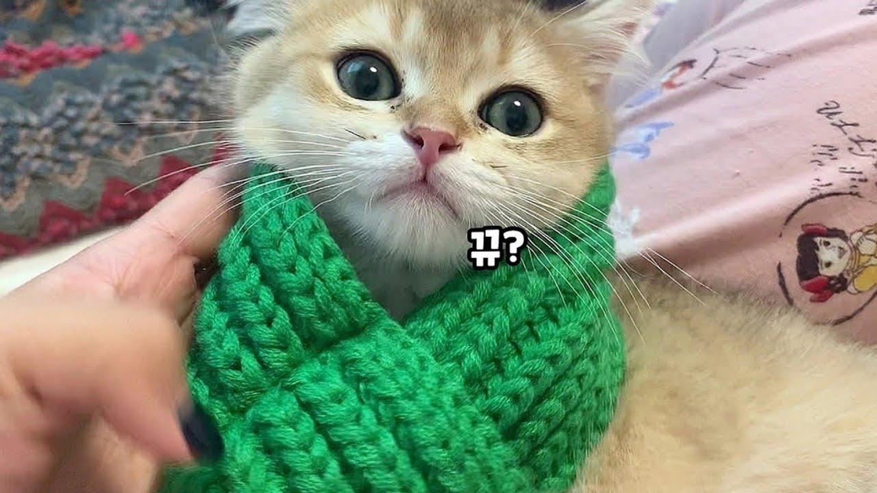 아기고양이가 이렇게 귀엽습니다