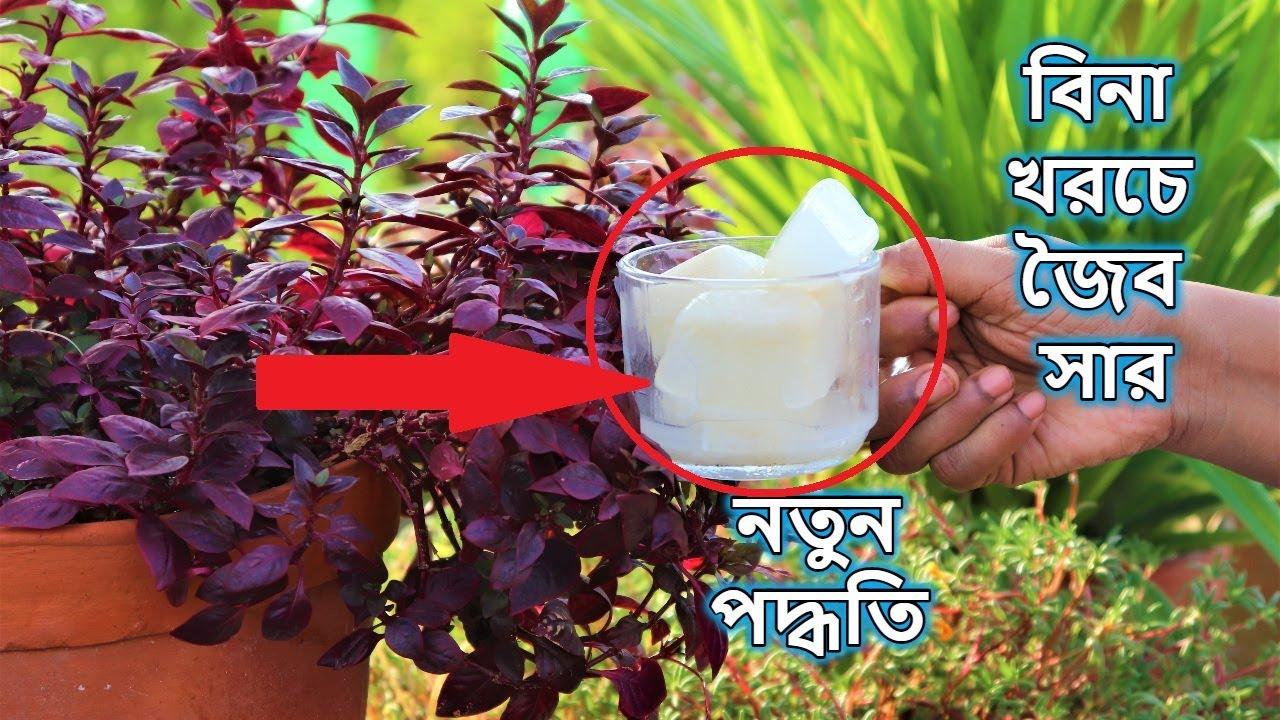 নতুন পদ্ধতিতে বিনা খরচে বাড়িতে তৈরি করুন জৈব সার    চাল ধোয়া জল   Organic fertilizer for any plants