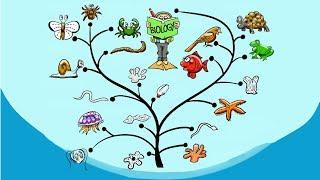 2. Систематика  (7 класс) - биология, подготовка к ЕГЭ и ОГЭ 2018
