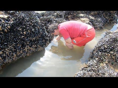 Pembrokeshire Wild Prawns and Sea Spaghetti beach feast with Craig Evans