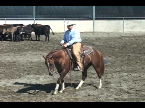 6a66d48132 Cutting Horse Training Problems, 3-yr-old, part 1 - YouTube