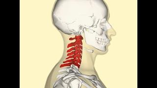 Super cvik na rozcvičenie krčnej chrbtice