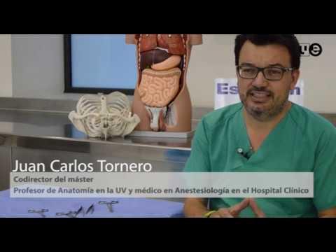 Máster en Anatomía Ecográfica en Anestesia Regional y Dolor - YouTube