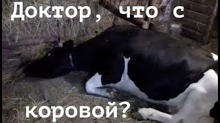 Необычное поведение коровы. КОЛИКИ. What with the cow. Colic