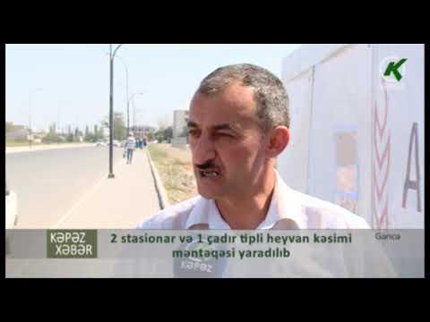 2 stasionar və 1 çadır tipli heyvan kəsimi məntəqəsi yaradılıb - Kəpəz TV