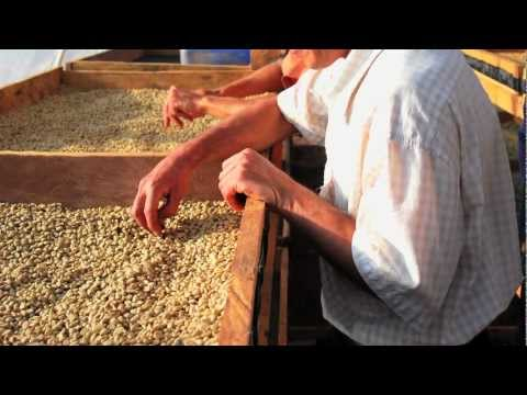 Fair Prices and Quality Coffee through Direct Trade