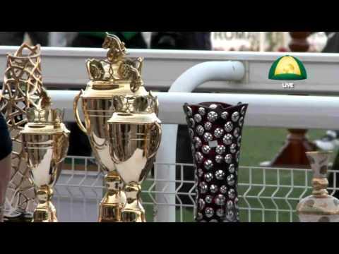 Races Abu Dhabi Equestrian Club - 08-NOV-015