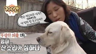 Labrador retriever leaves pregnant wife behind for a suspicious getaway? -Suspicious outing EP1-