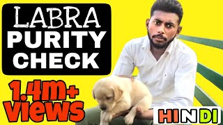 Video How to Check Labrador Puppy Purity in hindi || Pure Labra || Pure breed || dog training in hindi download MP3, 3GP, MP4, WEBM, AVI, FLV Agustus 2018