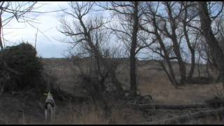 Kansas Quail Hunt Jan 2012 - Best Shots