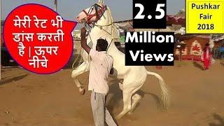 पुष्कर मेले में  हुआ डांसर घोड़े का मोलभाव   Horse Deal In Pushkar Fair Horse Market