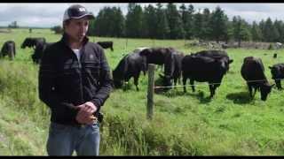 Coopérateur | Vaches-veaux au pâturage