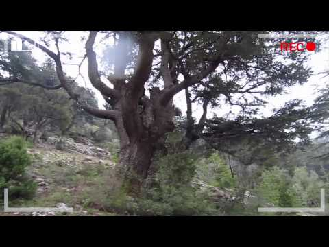 Discover Wild Lebanon on the Lebanon Mountain Trail
