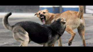 В Ачинске брошенного на улице младенца обглодали собаки
