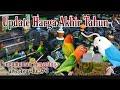 Update Harga Lovebird Terbaru Akhir Tahun Pengumuman Give Away Ke   Mp3 - Mp4 Download