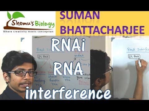 RNAi mechanism | RNA interference pathway using siRNA and shRNA