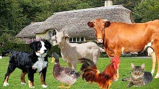Учим голоса животных на веселой ферме в гостях у Маши и Вани  Animal Sounds.