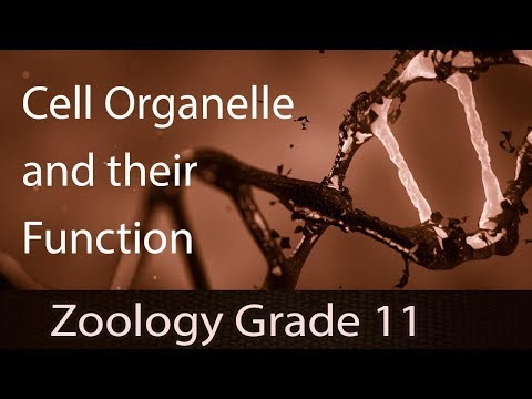 Cell - The Unit Of Life | Cell Organelle & Their Function | Diffusion & Osmosis | Osmosis Practice
