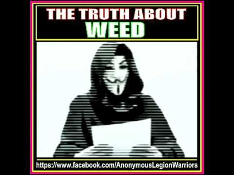 Cannabis Cures Cancer and The Government Has Known Since 1974 Marijuana Kills Cancer